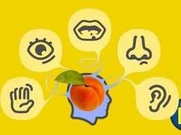 Marketing Sensoriale nel digital marketing