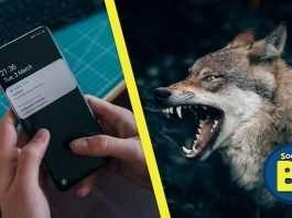 Istinto animale e notifiche